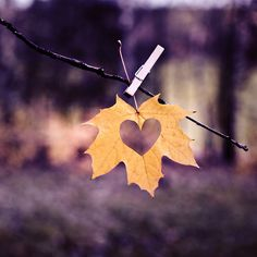 Lovely. fall leaves, heart, season, autumn leaves, place cards, paper punch, autumn weddings, fall weddings, cut outs