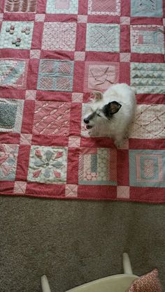Quilts, Learning, Dogs, Quilt Sets, Doggies, Quilt, Log Cabin Quilts, Study, Lap Quilts