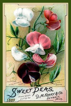 Ferry Seed Packet 1889 in a set of 4-4x6 quilt blocks by American Quilt Blocks…