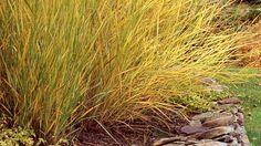 Top 10 Plants for Coastal Gardens: Ornamental Grasses Seaside Garden, Coastal Gardens, Beach Gardens, Coastal Homes, Cottage Gardens, Coastal Farmhouse, Coastal Style, Coastal Decor, Coastal Furniture