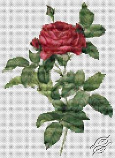 Rosa Gallica Pontiana - Cross Stitch PDF Pattern By The Art Of Stitch