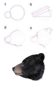 Realistic Drawings How to Draw Animals: Bears and Pandas, and Their Anatomy Animal Sketches, Animal Drawings, Drawing Sketches, Drawing Animals, Drawing Lessons, Drawing Techniques, Realistic Drawings, Easy Drawings, Urso Bear