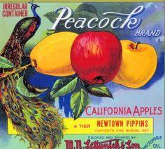 *Original* WILKO Wilbur-Ellis Seattle Portland Apple Crate Label NOT A COPY!