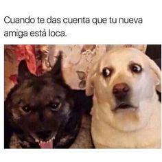 #elpanda_ok