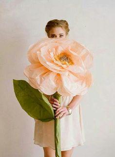 Magnifique... ...  Fleur géante... ...
