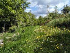 Was ist Permakultur? Und wie setz ich das für meinen Garten um? Für ein Basisverständnis lies doch einfach mal unseren Beitrag!