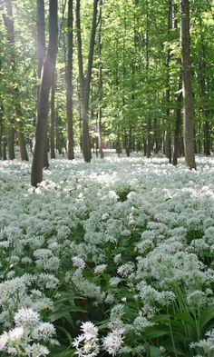 Animals 🌻 Flowers, Gifs 🌻 Landscapes - Comunidade - Google+