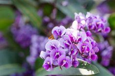 Mountain Azalea Info: Tips For Growing Wild Azaleas In Gardens