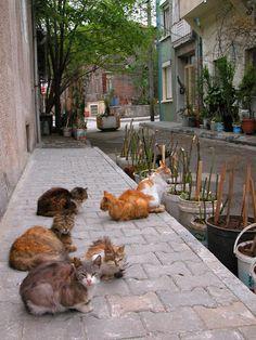 Street Cats  Princes Islands  Istanbul Turkey by MorrisClassics, $15.00