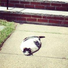 Amazing Flounder Cat found, part fish, part cat.  Hates Tuna