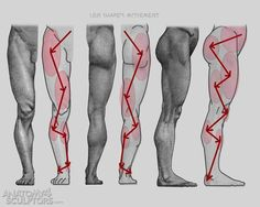 Anatomy Drawing Reference Anatomy For Sculptors - proportion calculator, store, services, video, links… - Leg Anatomy, Anatomy Poses, Muscle Anatomy, Anatomy Study, Anatomy Art, Anatomy Drawing, Human Anatomy, Anatomy Images, Leg Reference
