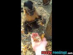 Monkey Teaches Human How to Crush Leaves