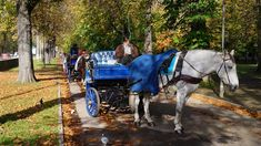 Fiaker Innsbruck Innsbruck, Horses, Animals, Mayrhofen, Culture, City, Pictures, Animales, Animaux