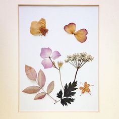 Oooh these colours of #driedflowers... #rose #petals make good butterflies. Day 20 of #100daysofbotanicalcollages #the100dayproject