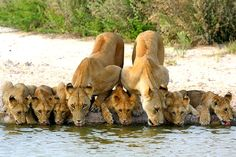 Animal and Beauty: Family, Família