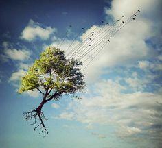 Surreal - por Sarolta Bán