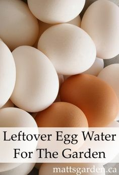 The next time you boil a dozen eggs, save the water and pour it on your garden and plants.  The water becomes enriched with calcium when the eggs are cooked.  Plus, why pour water down the sink when you can reuse it for something, right?