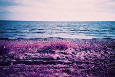 紫系の鮮やかな色合いの写真が撮れるフィルム「LomoChrome Purple XR 100-400」