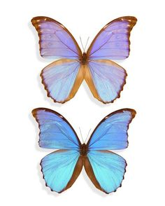 I have always had this love for butterflies, to me they represent love, life cycles, beauty, spiritual development, transformation and growth. For a very long time growing up this was my spirit guide, and I used to wear butterfly rings. They lifted my spirits higher with every time they appeared by my side as a sign.