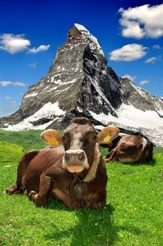 Switzerland! Home of Swiss cheese, chocolates, pocket Knives... *Expat Explore South Africa*
