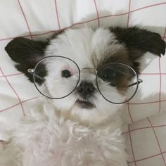 i hope those aren't prescription glasses, they could hurt the dogs eyes