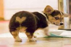 18 Animals With Heart Markings Who Want To Be Your Valentine