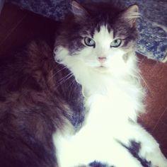 Cat on catnip :)