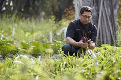 Chef Dave Abella harvests fresh produce daily from West Steak & Seafood's own three-acre farm
