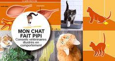 Conseils vétérinaires en comportement : pourquoi mon chat fait pipi partout. Mon chat fait pipi partout et urine sur mon lit. Mon chat pisse partout