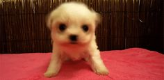 Or this nay-saying puppy? | 17 Things That Are So Fluffy