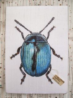 Margaret Dier Embroidery: Silk shaded beetle.