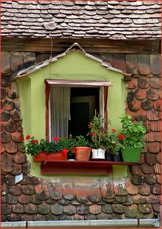 A pretty, perky little window perched on a roof.... love the color, love the pots and love the roof tiles.