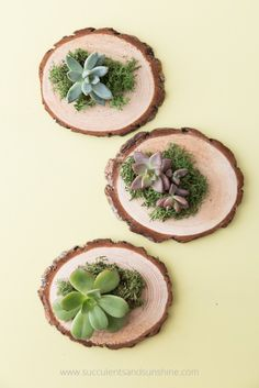 If you're looking for DIY unique wedding favors, these succulent arrangements are perfect! So easy and cheap to make!