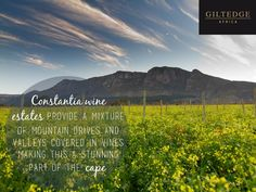 Cape Town | Constantia Wine Estates Table Mountain, True Beauty, Cape Town, Vines, Africa, City, Travel, Image, Real Beauty