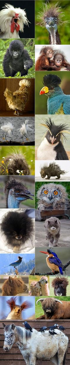 And you thought you were having a bad hair day? #badhairdays #animals #hairhumor