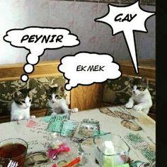 Kedi yavruları :)