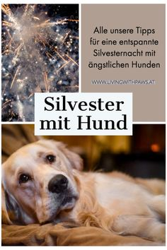New Year's Eve with anxious dog - Hunde - Puppies Mastiff Mix, Dog Whisperer, Cat With Blue Eyes, Pets 3, Nouvel An, Dog Love, Animals And Pets, Dog Training, Cute Puppies