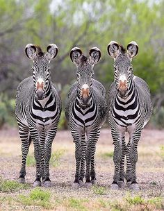 Three Amigos | Flickr - Photo Sharing!