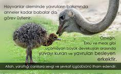 Yusuf Yahya - Google+