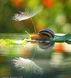 Education Joyeuse: « Garder le fil de la merveille »