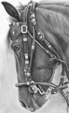 Jato - graphite drawing by Maria D'Angelo. Equis Art Gallery