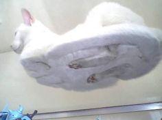cat on glass