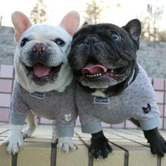 """It's time for a Wild and Wooly Weekend!"", French Bulldog Buddies in Jammie's, @masa.fb"