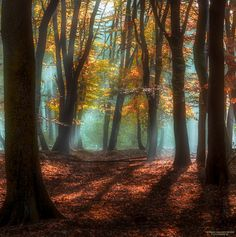 "Secrets - A superb morning at the forest. Best viewed on black (click image or press ""M"")"