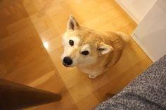 掻いてほしい | 柴犬マコと、