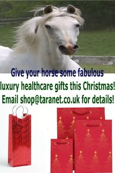 Gifts for your horse - at ANY time of the year!