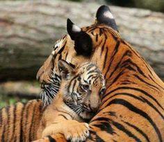 Big cats love hugs too !!