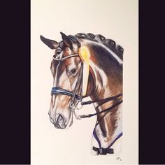 Finishedddd (kinda)   loved working on this one 😍  If someone knows the photographer of the reference-photo please dm me 😊☝️  #horse#horseportrait#portrait#drawing#horsedrawing#animalart#art#horseart10#horseart#equine#equineart#equestrian#dressage#dressur#dressagehorse#bay#portrait#headshot#colouredpencil#coloredpenil#fabercastell#polychromos#competition#tack#bridle#pet#horseartist#equineartist#animalcreatives#animalartistry