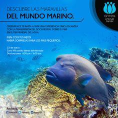 El próximo 22 de marzo viviremos una experiencia increíble, ¡ven con tu familia y aprende sobre el mundo marino! #Queretaro #Mexico