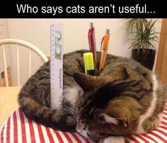 21 Funny Animal Pictures for Your Wednesday | Page 17 | Love Cute Animals